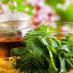 Benefícios do Chá de Urtiga